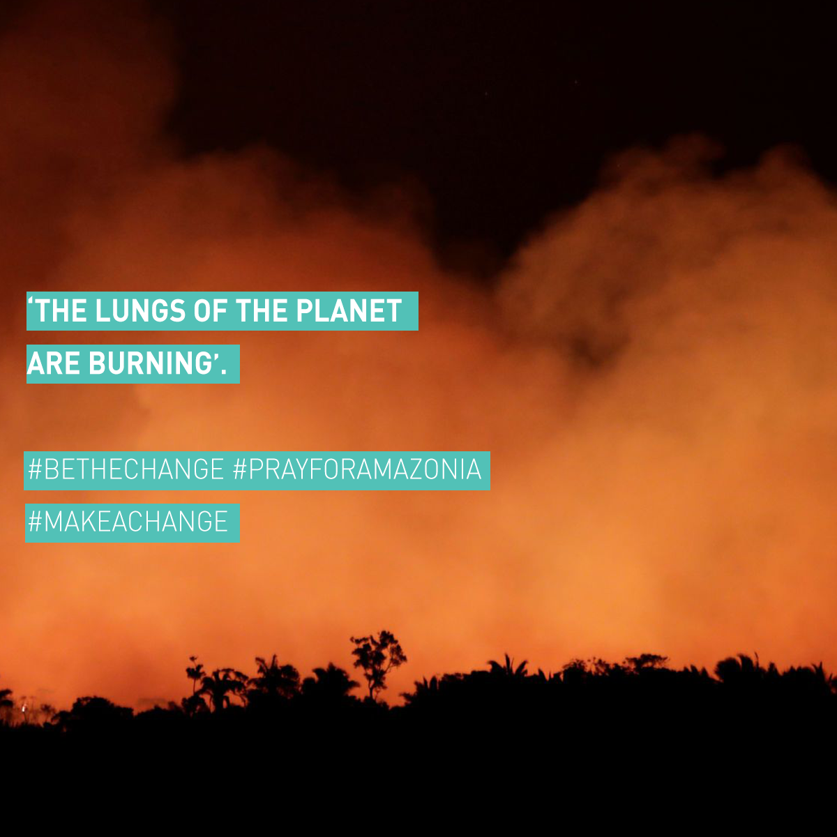The Amazon Rainforest is ablaze – and you can help.